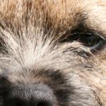 Tiggy's nose